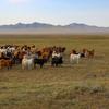【ユーラシア大陸横断】モンゴルのゲルに宿泊!!1週間ホームステイしてみた 体験談