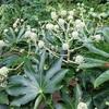 万博公園冬の花と花言葉その3