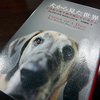 Book / 犬から見た世界