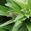 庭に来た虫たち(2)