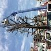 本川越ペペの木