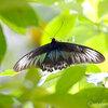 ペナン島ツアー その6 バタフライファーム「entopia」 木の精霊とレインボー