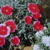 5月21日花と花言葉・歌句