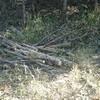 薪ストーブ始生代64 茶畑山での作業も大詰め②~長い枝の処理と焚き付け作り。