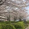 横須賀でお花見&観光をしてきたよ。