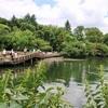 井の頭公園でボート遊びなど