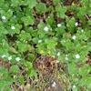 田舎で過ごす週末12 初夏の花(5月中旬)