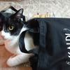 今日の黒猫モモ&白黒猫ナナの動画ー944