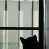 ネコがまたやってくれました…。小さく破れた網戸の簡単な補修は,網戸補修シートで。
