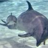 イルカの赤ちゃんに逢う♪