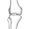 ランニングで膝が泣く?軟骨がすり減るメカニズムを医学的に解説