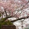 仙台駐屯地創設54周年記念行事(仙台駐屯地桜まつり)に行ってきた