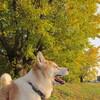 犬と黄葉を愉しむ