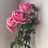 🌙 占い師と「花と、十八禁と、血糖値」