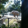 土日のごはんと、動物園と母校
