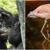 '動物園職員'が動物から発見した興味深い事実7つ
