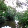 ガラマ川でテングザルが急接近