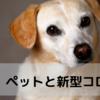 飼い主さんがコロナ感染したら、ペットはどうしますか?#StayAnicomプロジェクト
