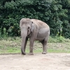 よこはま動物園ズーラシアデートは楽しめる?動物園デートのメリット、デメリット