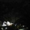 サクランピック2021 無謀な夜間開催!名鉄本線サクラ巡り