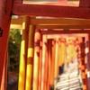 今年も根津神社へ。