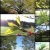 「秋の詩」の苗代と菜の花の田んぼのあぜ塗りと萌える春