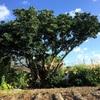 コミュニティ万歳✨ みんなで大木伐採‼️