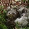 野鳥の巣立ちがはじまった  残留1名アリ