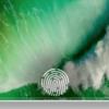 2021iPhoneの「TouchID内蔵ディスプレー」搭載はFace IDの補完的意味合い?〜ミンチー・クオ氏のレポートから〜
