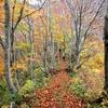 落ち葉の道を行く