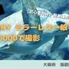 【初心者 おすすめ】SONY α6000で撮影 海遊館編【神レンズ SEL50F18】