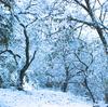雪のマリア