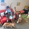 猫カフェは最高の楽園です(*´ω`*)