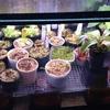 食虫植物温室の現況