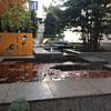 サンパウ前広場の紅葉 at COREDO日本橋