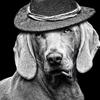 犬と煙草、どちらがお好き? どうやら両方は選べないらしい ~禁煙のススメ(前編)~