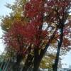 束の間の秋にはしゃぐ