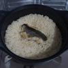 【ブラック鯛めし】釣ったクロダイで鯛めしを作った