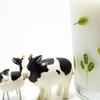 牛乳、乳製品は身体に悪い?~癌、鼻炎の原因にも~