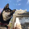 津のお城公園で