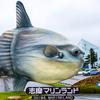 ⑤翻車魚見てエースで終了賢島