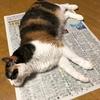 新聞紙乗っ取り事件