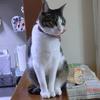座り方と顔のギャップおネコさま。