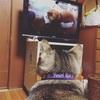 テレビを観るかた