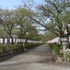 大銀杏が倒れてしまった鶴岡八幡宮に行ってきた