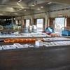 2020年8月12日 小浜漁港 お魚情報