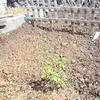 チューリップを咲かせたい ~そして春~