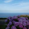 紫陽花と海。