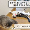 猫の病気 ~12月の血液再検査~