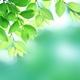 植物由来、天然由来の真実 【ジョンマスターオーガニックが全商品の4割を自主回収】